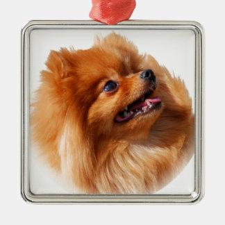 Ornamento De Metal Spitz de Pomeranian