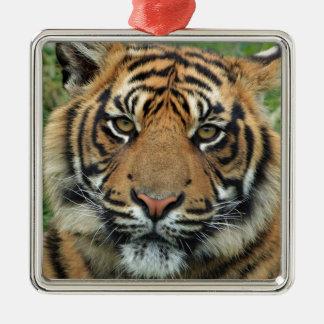 Ornamento De Metal Tigre adulto