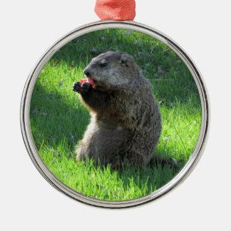 Ornamento De Metal Tomate Groundhog