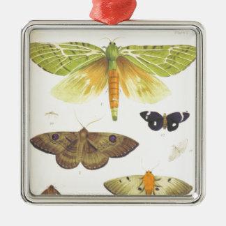Ornamento De Metal Traças e borboletas de Nova Zelândia