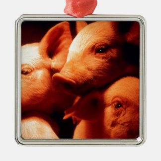 Ornamento De Metal Três porcos pequenos