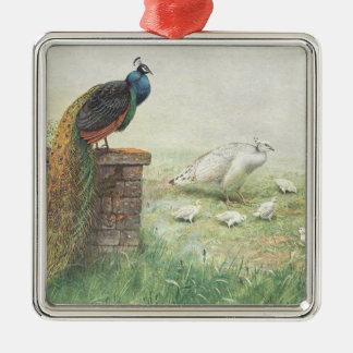 Ornamento De Metal Um pavão e um branco azuis peahen com pintinhos
