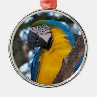 Ornamento De Metal Verde amarelo e Macaw tropical azul
