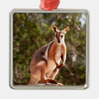 Ornamento De Metal Wallaby de rocha amarelo-footed australiano