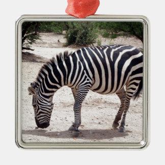Ornamento De Metal Zebra africana no jardim zoológico