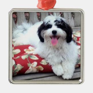 Ornamento do cão, K-ECO no balanço