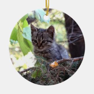 Ornamento do círculo do gato do bebê da foto do