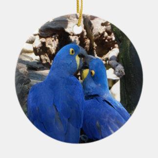 Ornamento do círculo do papagaio