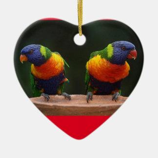 Ornamento do coração do papagaio do arco-íris