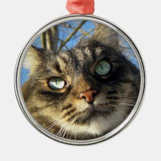 Ornamento do gato do gatinho do racum de Maine
