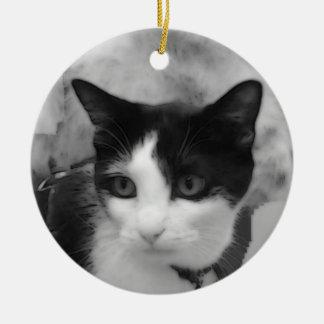 Ornamento do gato do smoking