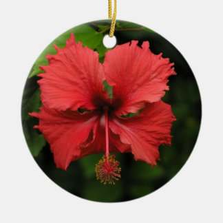 Ornamento do hibiscus