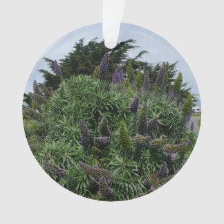 Ornamento do Lilac de Califórnia