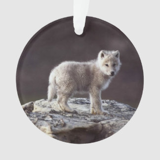 Ornamento do lobo do bebê
