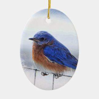 Ornamento do oval do Bluebird