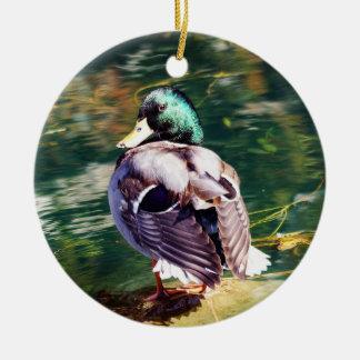 Ornamento do pato do pato selvagem