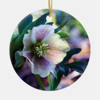 Ornamento do rosa quaresmal