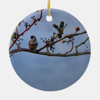 ornamento Dobro-barrado do passarinho