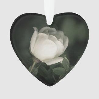 Ornamento Dogrose branco em um fundo escuro. Adicione seu