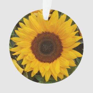 Ornamento floral da fotografia da flor do girassol