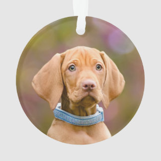 Ornamento Foto puppyeyed bonito do filhote de cachorro do