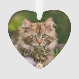 Ornamento Gato bonito do gatinho do racum de Maine em um