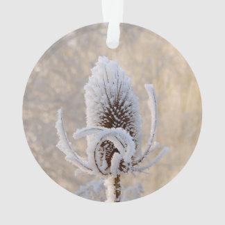 Ornamento Hoarfrost na natureza cénico da foto do inverno