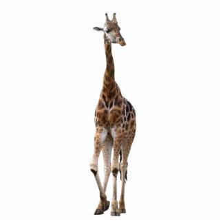 Ornamento nomeado girafa da parte superior da pont fotoesculturas