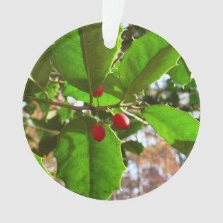 Ornamento O azevinho sae da natureza do feriado II botânica