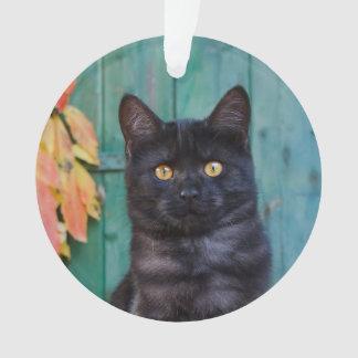 Ornamento O gatinho bonito do gato preto com vermelho sae da