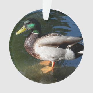 Ornamento Pato do pato selvagem