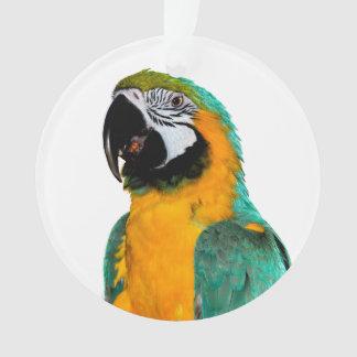 Ornamento retrato colorido do pássaro do papagaio do macaw