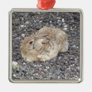 Ornamento selvagem do coelho de Jack