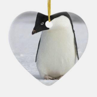 Ornamento só do pinguim