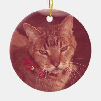 Ornamento surdo velho mal-humorado do gato malhado