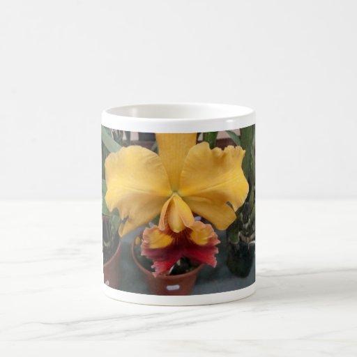 Orquidea amarela caneca