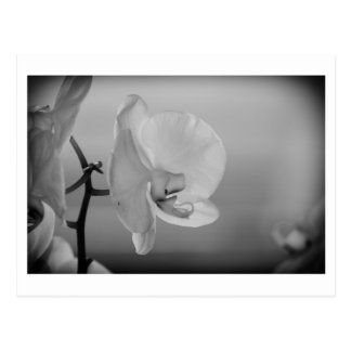 Orquídea branca - cartão