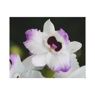 Orquídea branca e roxa impressão em tela