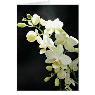 Orquídea branca no cartão de aniversário preto