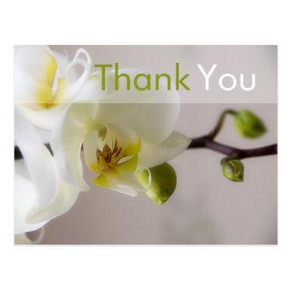 Orquídea branca • Obrigado cartão