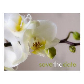 Orquídea branca • Salvar o cartão da data