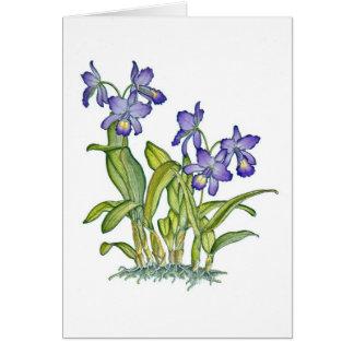Orquídea de Cattleya Cartão Comemorativo