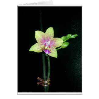 Orquídea do Phalaenopsis (vazio para dentro) Cartão Comemorativo