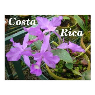 Orquídea -- Flor nacional de Costa Rica Cartoes Postais