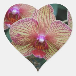 Orquídea listrada adesivo em forma de coração