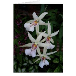 Orquídea Portuguesa-feliz do aniversário-four Cartão Comemorativo