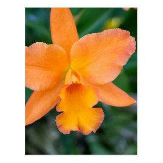 Orquídea Salmon Cartão Postal