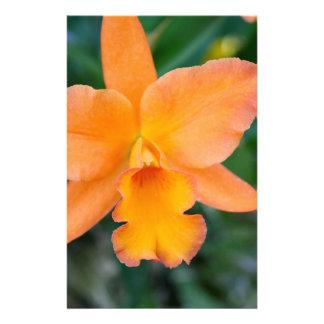 Orquídea Salmon Papelaria