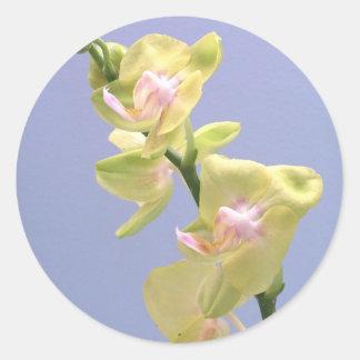 Orquídeas amarelas e cor-de-rosa na lavanda adesivo
