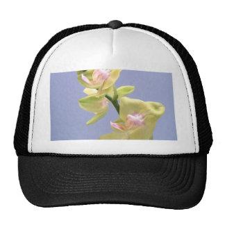 Orquídeas amarelas e cor-de-rosa na lavanda boné
